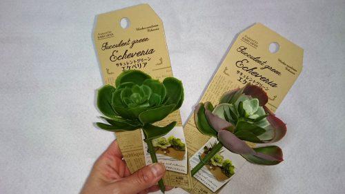 ダイソーの造花のエケベリア