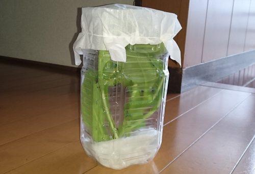 ペットボトルで作った容器
