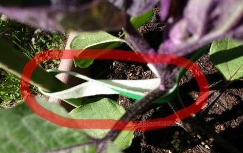 ダイソー 植物に優しい園芸テープの写真10