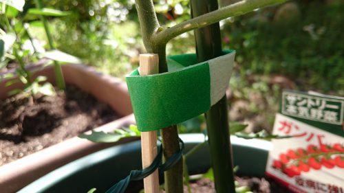 ダイソー 植物に優しい園芸テープの写真6