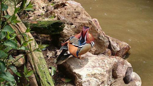 水鳥の写真
