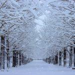 寒さも静電気も可愛く撃退!買って良かった100均ダイソーの「おしゃれな冬グッズ」3選。