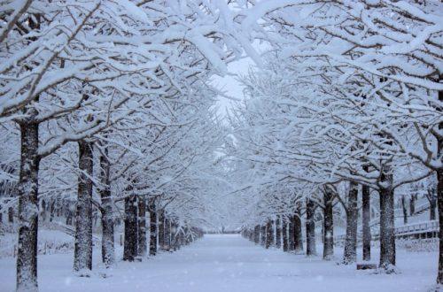 冬の寒そうな景色