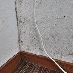 凹凸のある壁紙に発生したカビを材料2つで簡単に落とす!身近なモノでできるお掃除法。